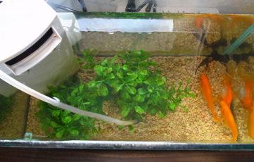金魚 GEX フィルター